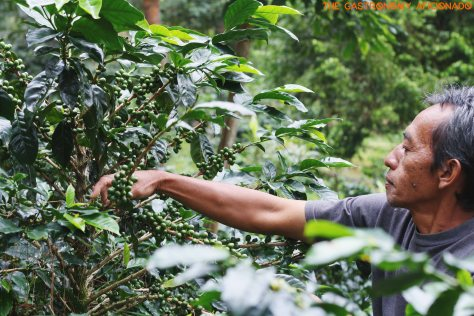 Coffee Plantation - Situ Lembang 2