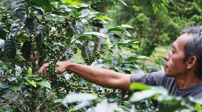 TGA Teaser: The Invisible Coffee Plantation