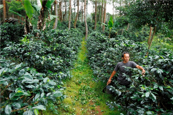Cover Feature: Lessons in Life From a Coffee Grower (The Foodie Magazine, Mar 2015)