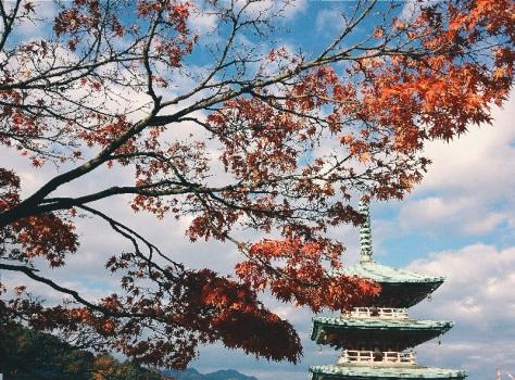 Island Hopping to Shikoku 9