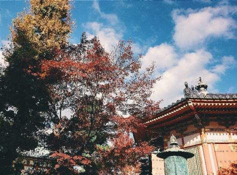 Island Hopping to Shikoku 5